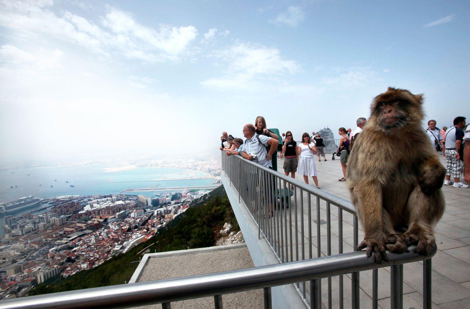 Gibraltar / Affen