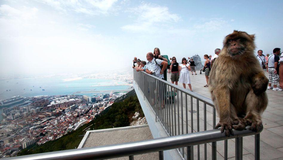 Affe auf dem Felsen von Gibraltar: Zufluchtsort für Finanzakrobaten