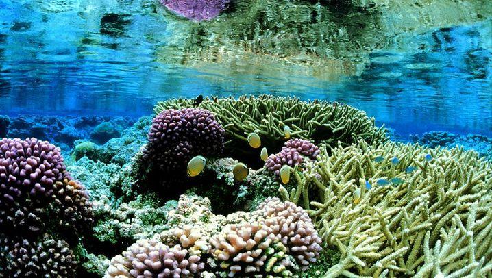 Umweltpolitik: Obama will mehr Meer schützen