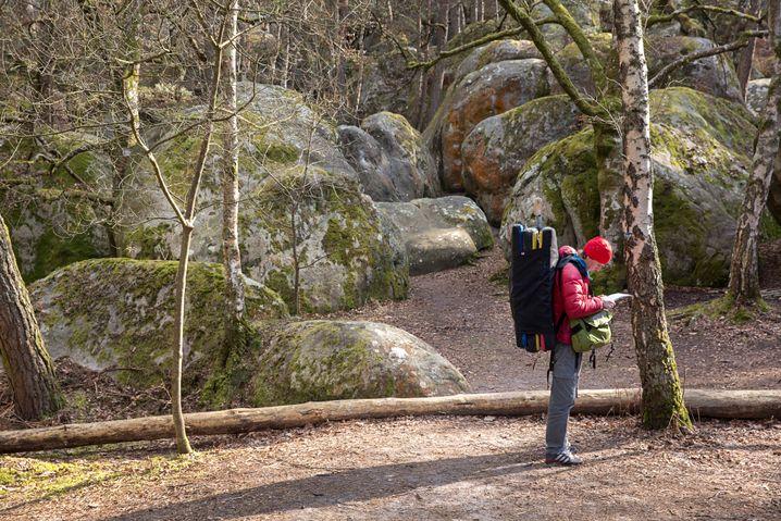 Boulderer auf der Suche nach dem perfekten Felsblock im Wald von Fontainebleau