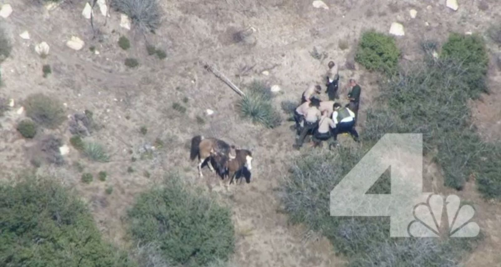 Horse Chase Investigation
