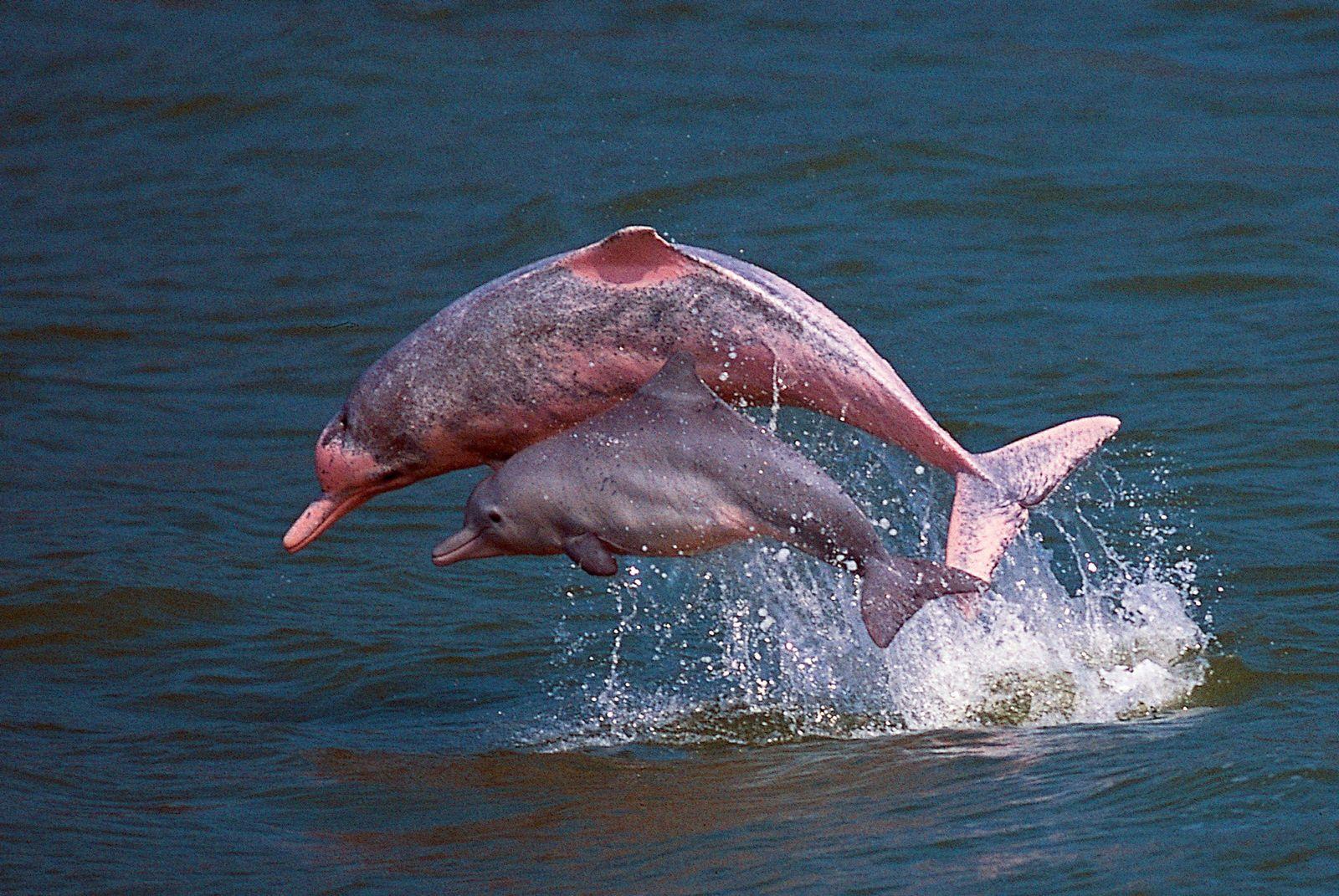 Delfine Hong Kong