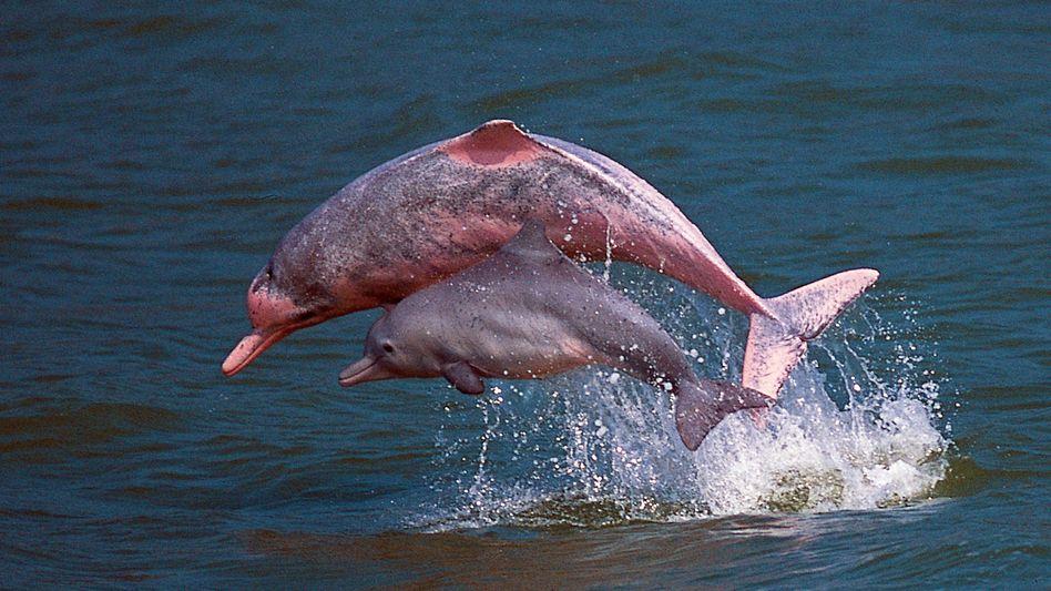 Delfine vor Hongkong: Weltweite Verteilung der marinen Säugetiere untersucht