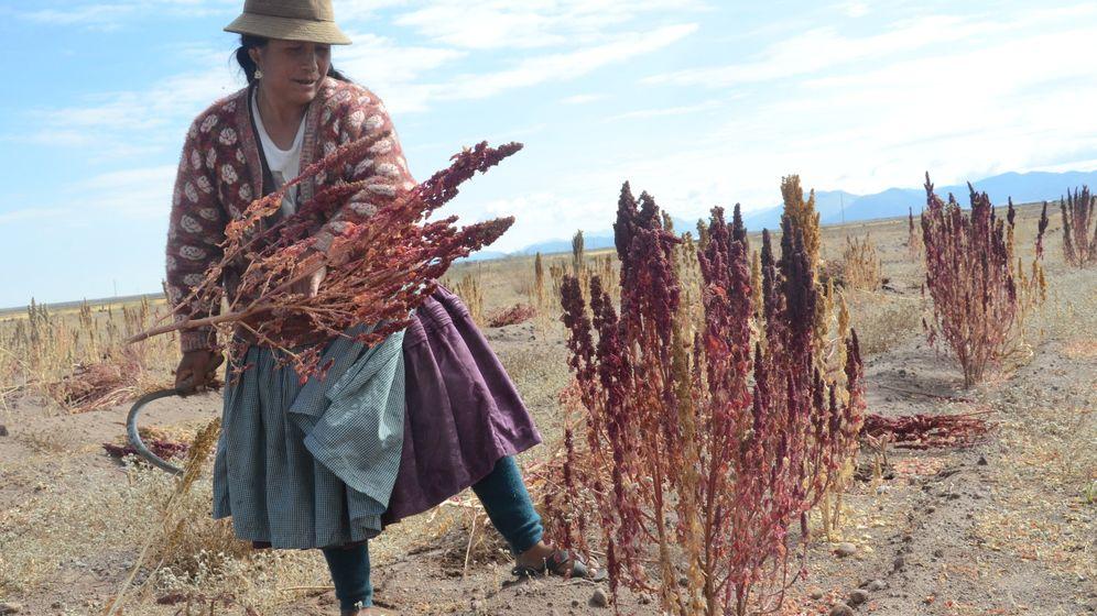 Quinoa-Boom: Das Leiden von Boliviens Bauern