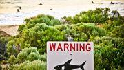 Tödliche Haiangriffe haben 2020 stark zugenommen