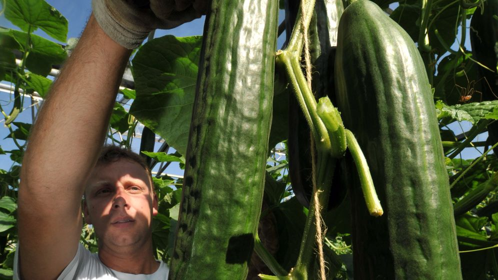 Lebensmittel: Wenn Nahrung im Müll landet