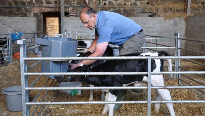 Brexit - ein Milchbauer aus Cornwall