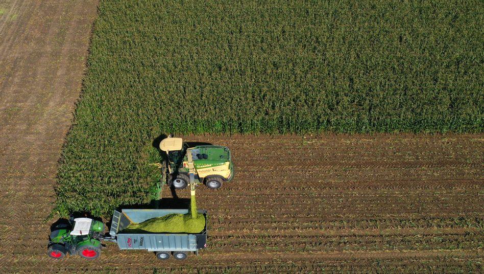 """Maisernte bei Rammingen: """"Die Bauern demonstrieren aus nachvollziehbaren Gründen"""""""