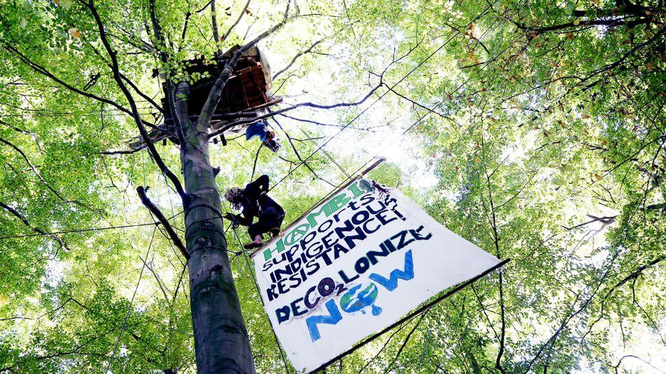 Besetzte Bäume im Hambacher Forst