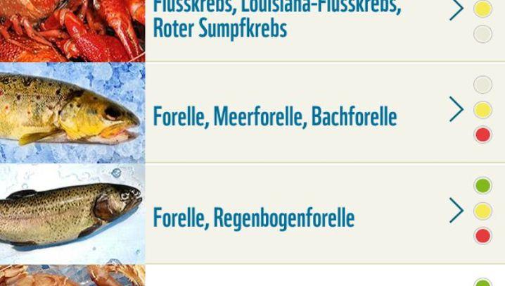 Nachhaltiger Konsum: Die Fischratgeber