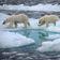 Das Eis am Nordpol ist nicht mehr zu retten