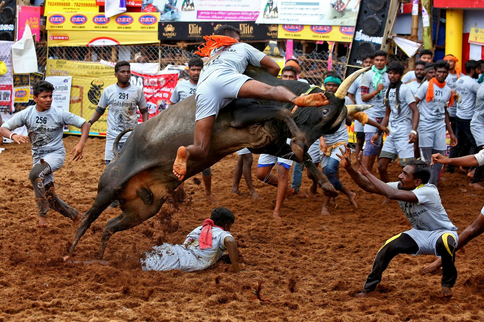 Villagers try to control a bull during a bull-taming festival, known as Jallikattu, on the outskirts of Madurai town
