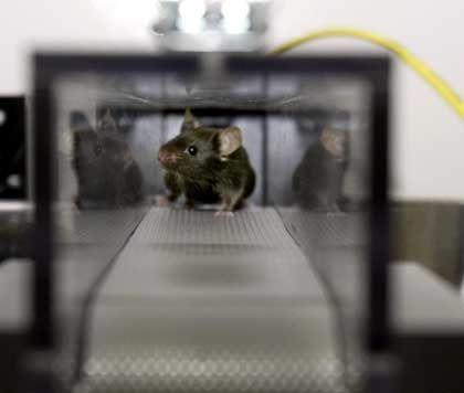 Fehlende Orientierung: Im Winter brauchen Mäuse länger, um sich zurechtzufinden
