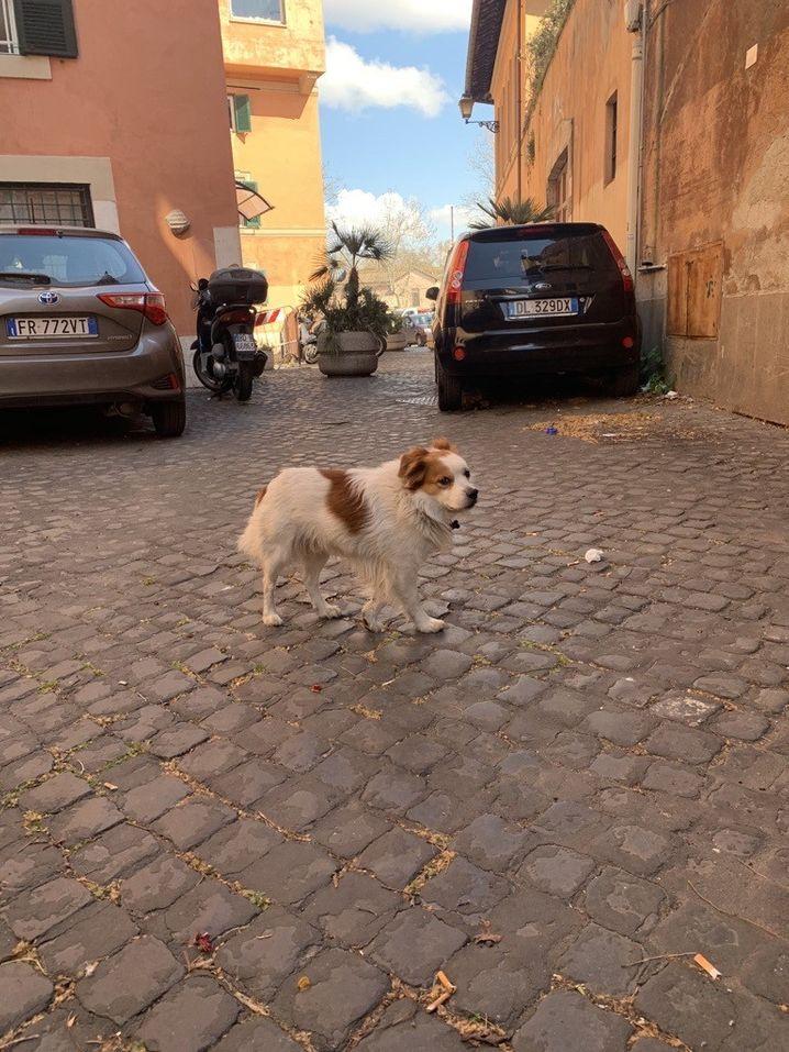 Ein herrenloser Hund streunt vor der Tür unseres Korrespondenten