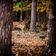 Neues Jagdrecht soll Wälder besser schützen