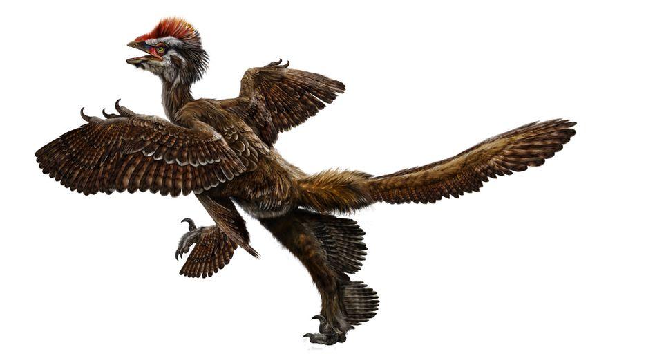 Anchiornis huxleyi: Taubengroß und mit vier Flügeln ausgestattet