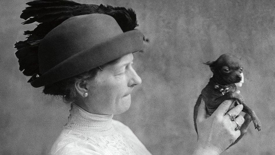 Taschenformat:1910 zeigte eine stolze Züchterin ihren Zwergpinscher – biologisch gesehen eine domestizierte Form von Canis lupus (vulgo: Wolf)