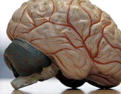 Gehirnmodell: Wohin man auch sieht, überall funken die Neuronen