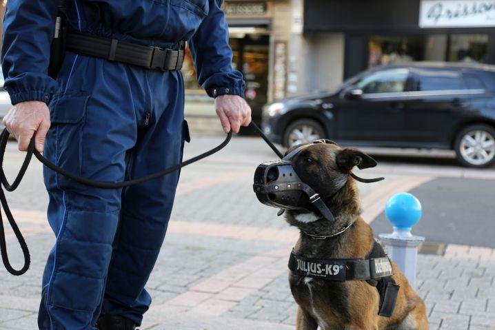 Polizeihund Lucky auf Streife in Hayange