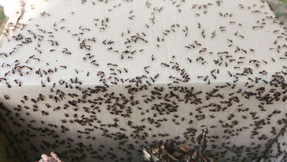 Insekteninvasion: 20 Millionen Ameisen lebten in Grundschule
