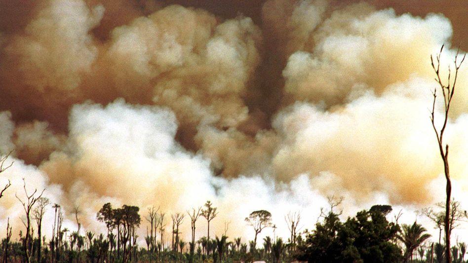 Brandrodung in Brasilien (1998): Einfluss von Ruß auf Treibhauseffekt unterschätzt