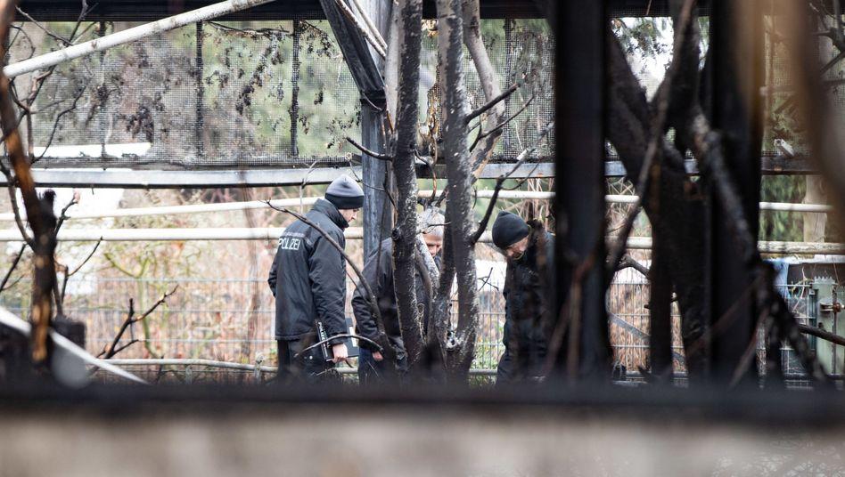 """Brandermittler der Polizei in den Ruinen des Affenhauses des Krefelder Zoos: """"Das ist rasend schnell gegangen"""""""