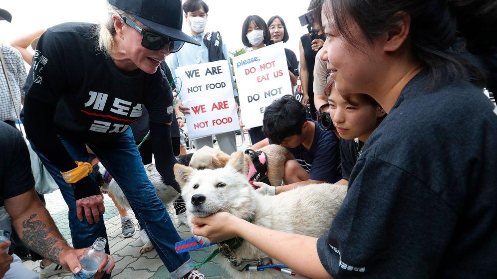 Kim Basinger in Südkorea: Demonstration für den Tierschutz