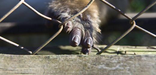 Corona-Bericht der Uno zu Zoonosen: Die nächste Pandemie kommt bestimmt