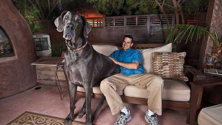 Guinness-Rekord: George, der Große