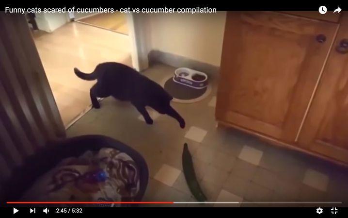 Screenshot eines Katzenvideos