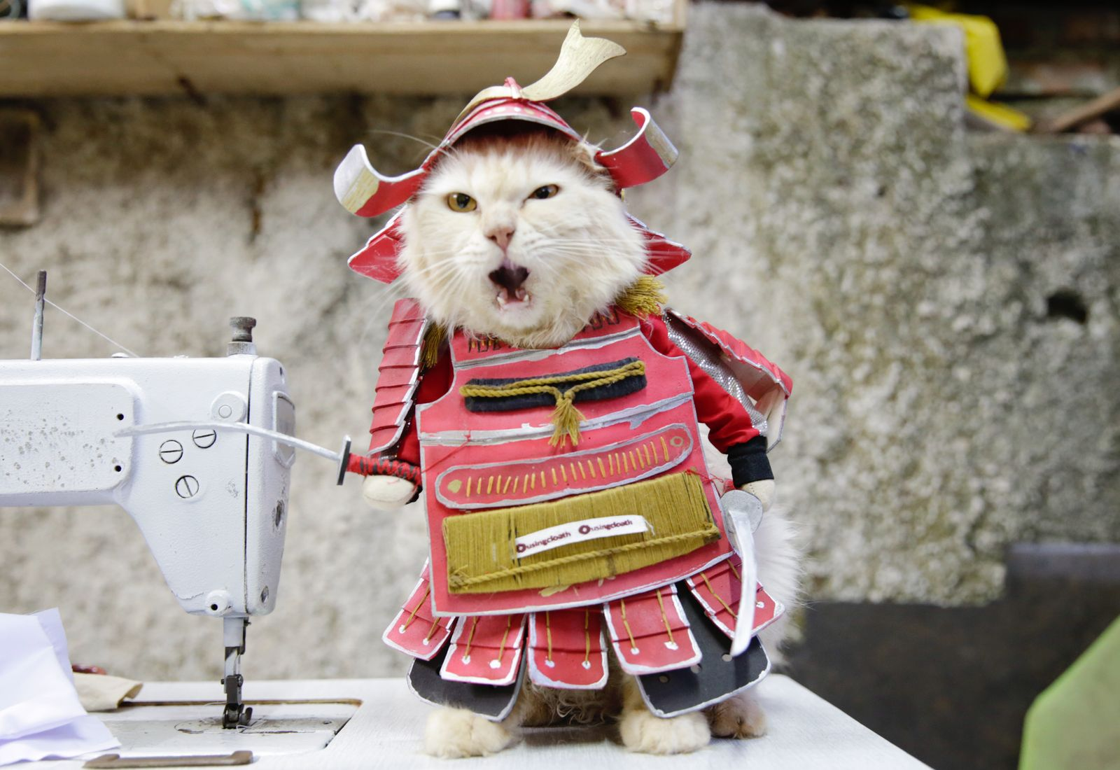 Indonesian tailor creates cosplay outfits for cats, Bogor, Indonesia - 02 Dec 2020
