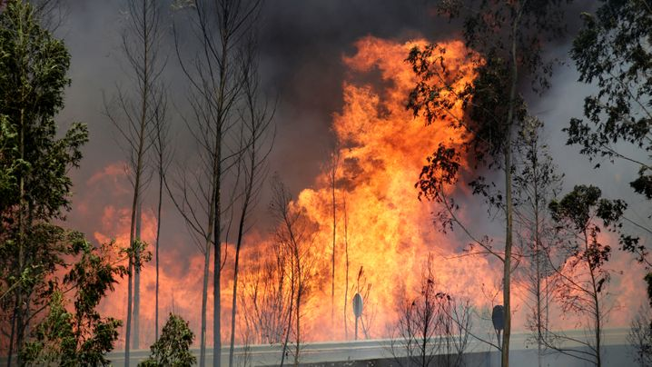 Waldbrand: Inferno in Zentralportugal