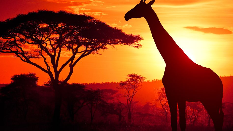 Afrika-Kitsch