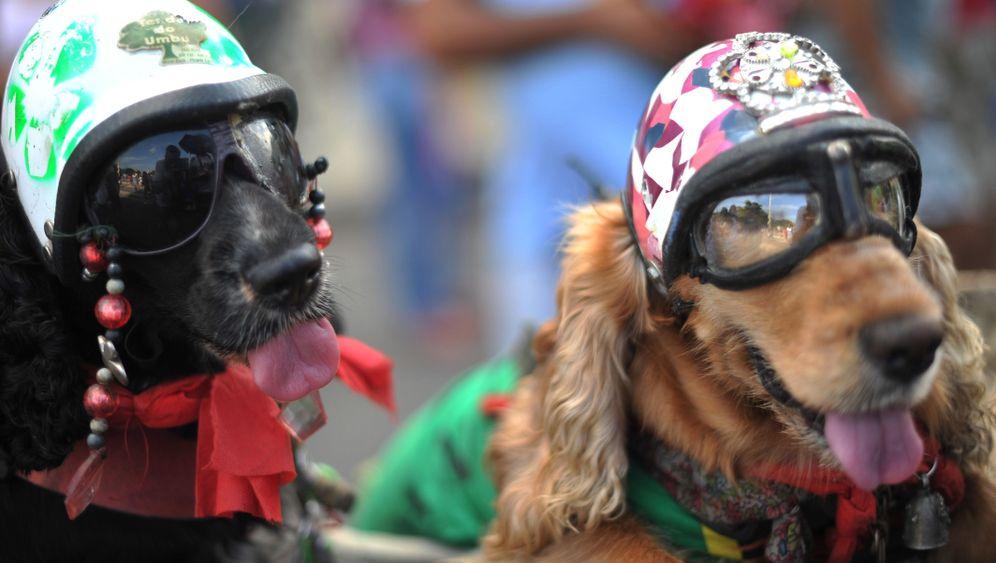 Karneval in Rio: Coole Hunde