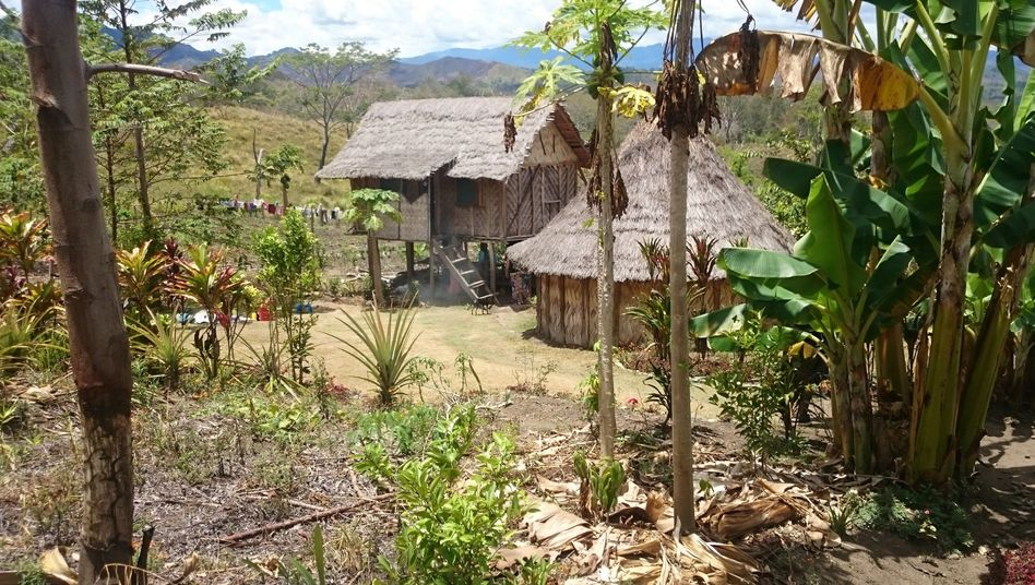 A typical residential hut in Papua New Guinea
