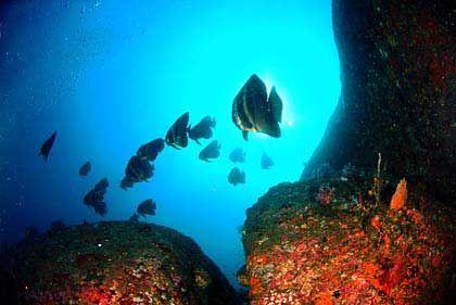 Fische: Lebensraum wird sich einschränken