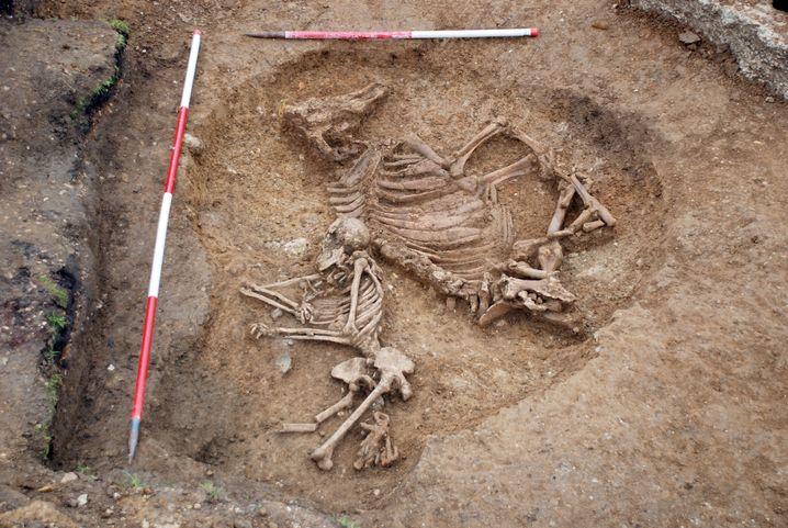 Grab: Frauengebeine und Kuhskelett