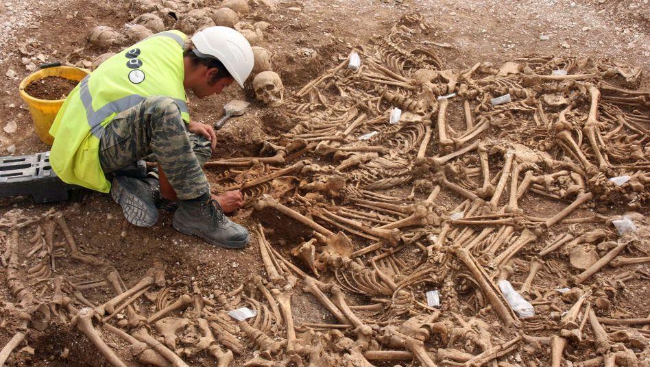 Skelettfund in Dorset: Die Knochen stammen von Wikingern