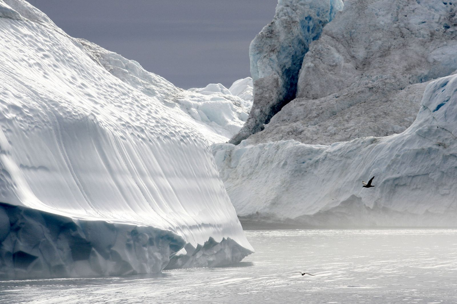 Arktis Eisberge
