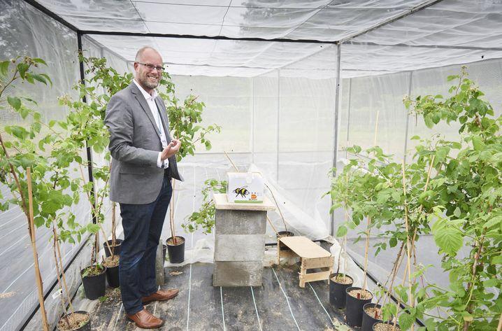 Zoologe Potts im Flugkäfig mit Hummeln und Himbeerpflanzen