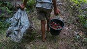 USA verhängen Einfuhrstopp für weltgrößten Palmöl-Produzenten