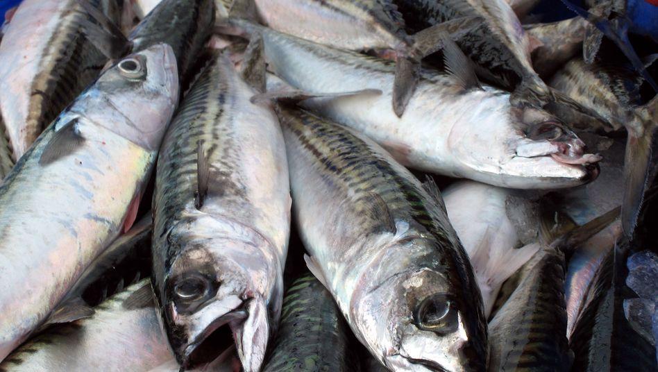 "Makrelen-Fang: ""Nehmt es, oder lasst es"""