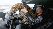 Russlands Tiger Kings