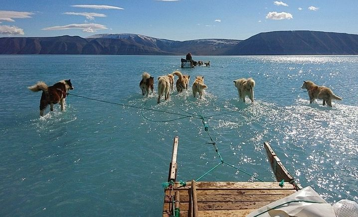 Normalerweise laufen Schlittenhunde über Schnee und Eis. Doch die Temperaturen steigen, das Eis schmilzt