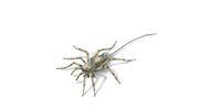 Als die Spinnen noch Schwänze trugen