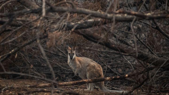 The Fires of Australia