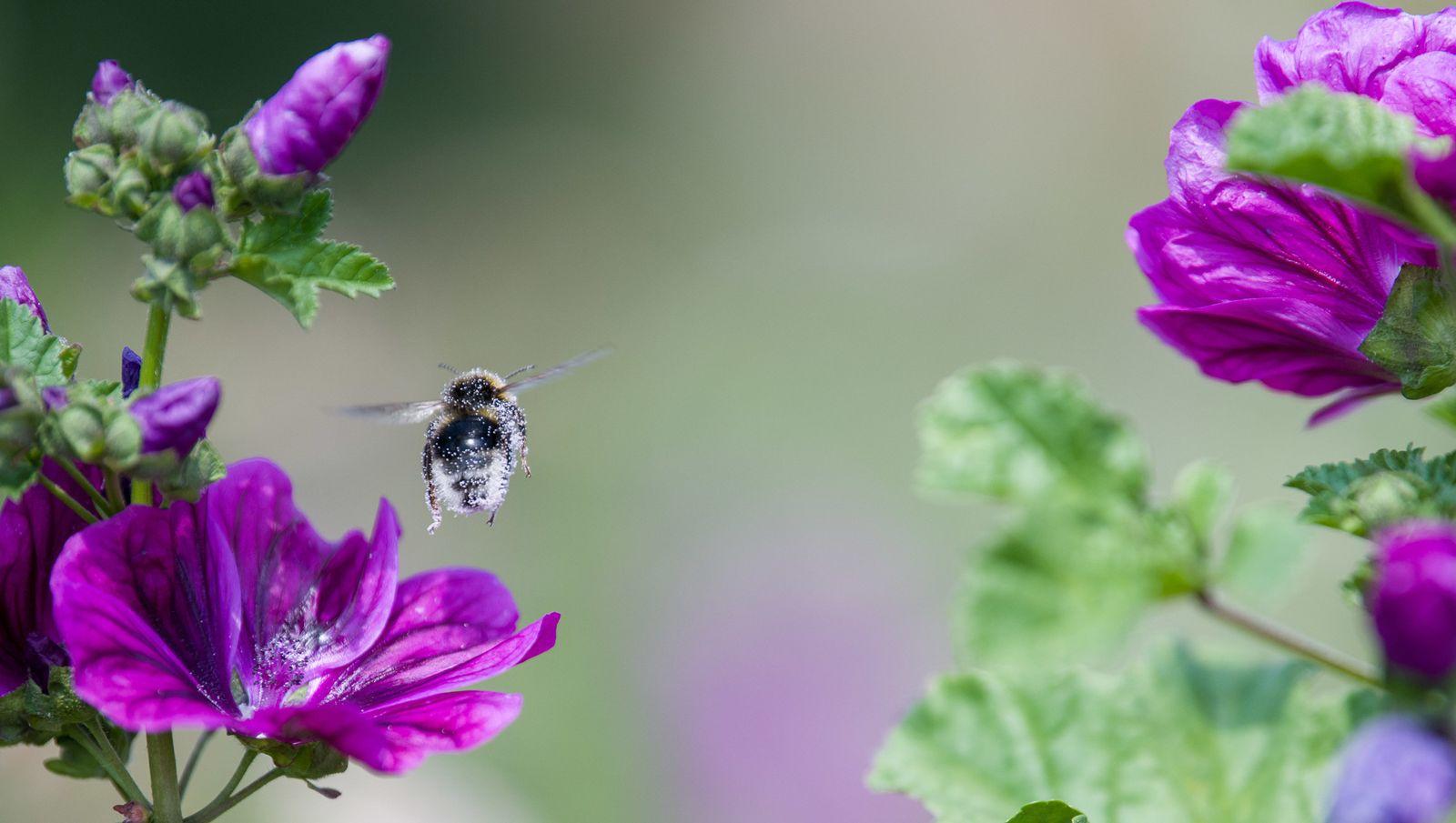 Bienenstrom
