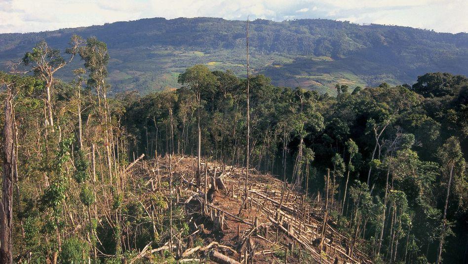 Abgeholzter Regenwald in Peru (Archiv)