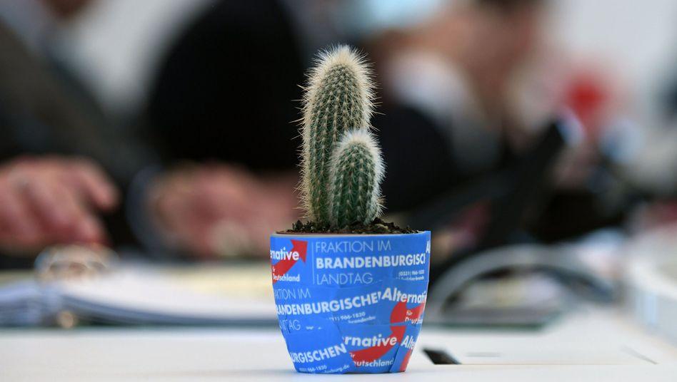 Ein Geschenk der AfD im Landtag von Potsdam