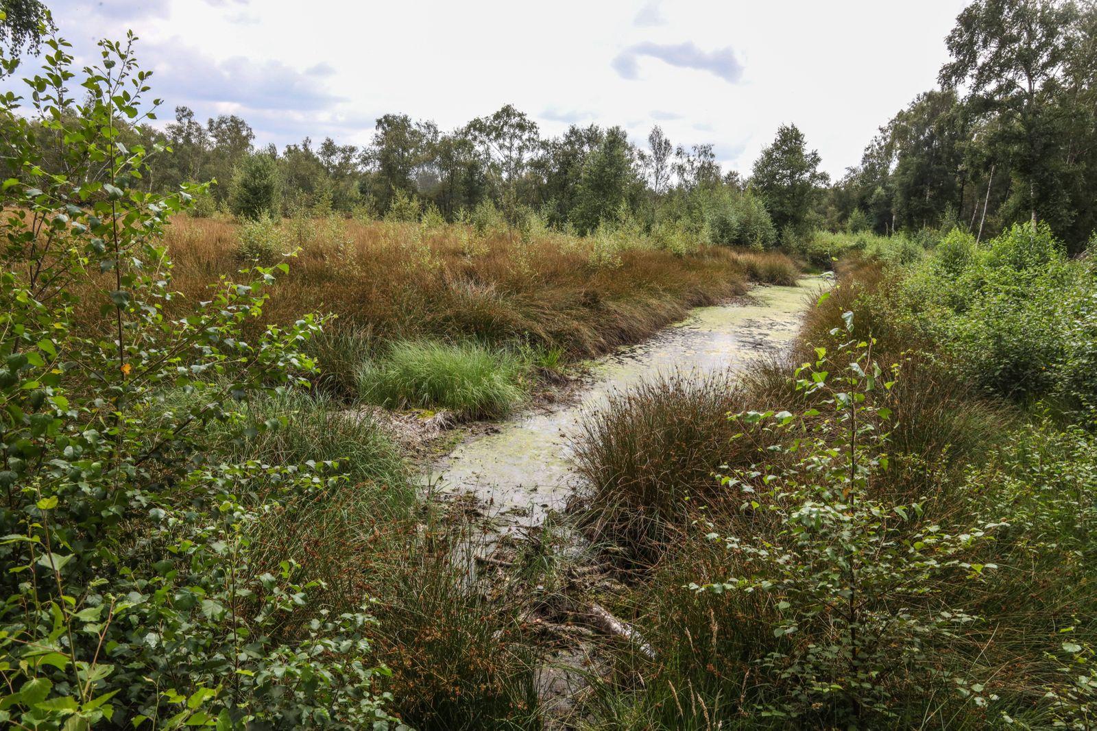DEU, Deutschland, Nordrhein-Westfalen, Senden, 02.08.2020: Naturschutzgebiet Venner Moor (Schutzgebiet nach der Fauna-F